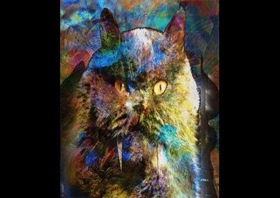 Cave Cat